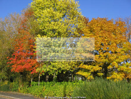 autumn colours cheshire environmental trees crewe england english angleterre inghilterra inglaterra united kingdom british