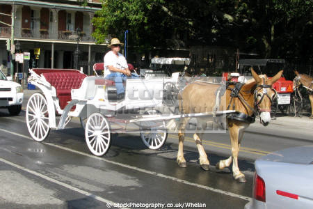 tourist horse carriage new orleans american yankee french quarter louisiana southern state united states