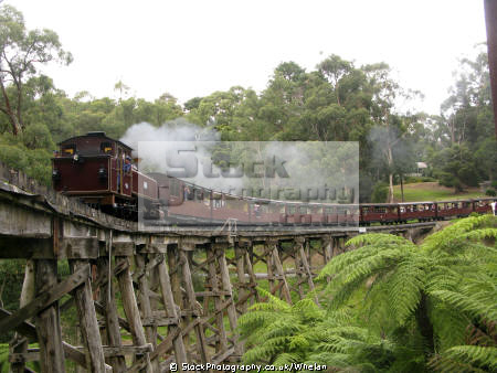 steam locomotive crossing tressle bridge puffing billy preserved railway belgrave near melbourne engines transport transportation victoria dandenongs trains australia australian