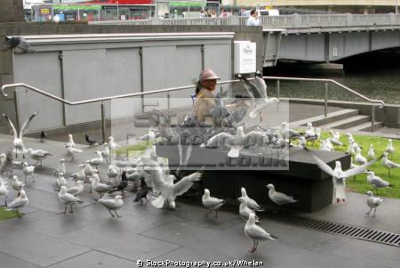 women feeding seagulls river melbourne birds aves animals animalia natural history nature seagull australia australian