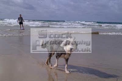 boy dog dogs canidae canine animals animalia natural history nature misc. seaside pooch mutt newquay cornish cornwall england english angleterre inghilterra inglaterra united kingdom british