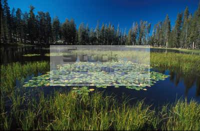 pond yosemite wilderness travel outdoors california californian usa united states america american