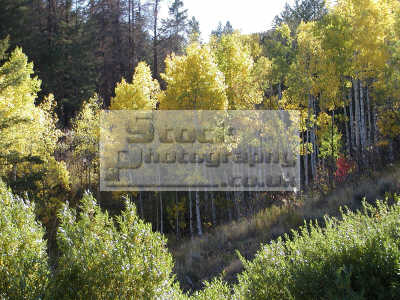 autumn scene west buckskin road pocatello idaho wilderness travel woods trees usa united states america american