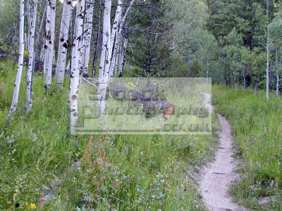trail west fork mink creek area pocatello idaho wilderness travel fresh organic outdoors hiking spiritual usa united states america american