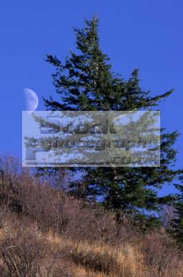 tree moon pocatello idaho wilderness travel fresh organic outdoors hiking spiritual usa united states america american
