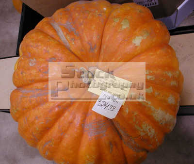 pumpkin fred meyer store pocatello idaho american yankee travel halloween vegatables usa united states america