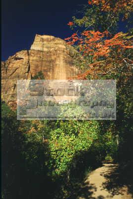 zion national park utah american yankee travel fresh organic outdoors hiking spiritual usa united states america
