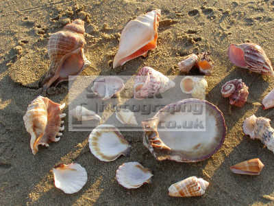 shells sand textures patterns abstracts misc. caribbean oceans
