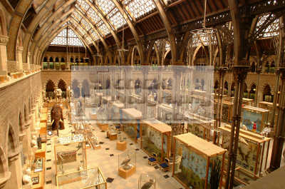 University Oxford Museum Interior Uk Museums British Architecture  Architectural Buildings Universities Learning Education Academic  Oxfordshire Home