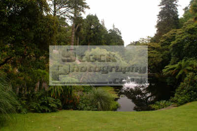 lost gardens heligan jungle valley pond gardening horticulture tourist attractions england english uk foliage cultivation shrubs woodland cornish cornwall angleterre inghilterra inglaterra united kingdom british