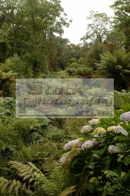 lost gardens heligan jungle valley tourist attractions england english uk foliage cultivation shrubs woodland cornish cornwall angleterre inghilterra inglaterra united kingdom british