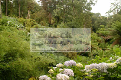 lost gardens heligan jungle foliage gardening horticulture tourist attractions england english uk cultivation shrubs woodland cornish cornwall angleterre inghilterra inglaterra united kingdom british