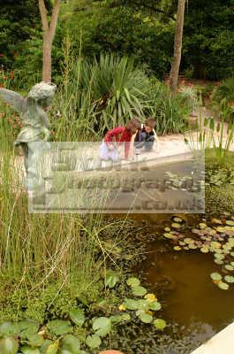lost gardens heligan children ornamental pond gardening horticulture tourist attractions england english uk lilies cornish cornwall angleterre inghilterra inglaterra united kingdom british